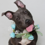 Blu and others are in need of loving homes